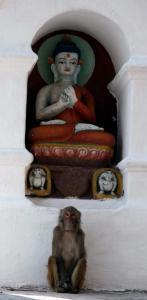 nepal Kathmandu 32a Swayambunath Monkey